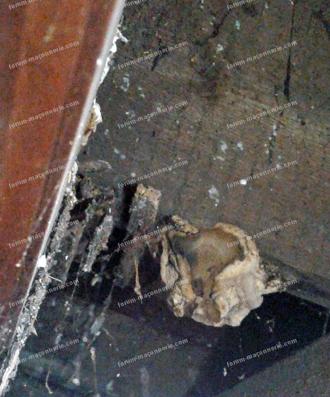 information champignons maison